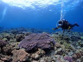 水納島&瀬底島でたっぷりダイビング!